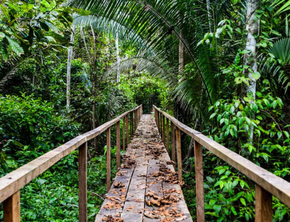 Dschungel-abenteuer im tiefsten Amazonas « oder: Let's explore! »