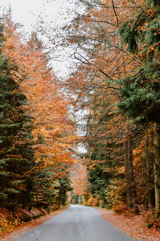 Herbstlaub im Böhmerwald