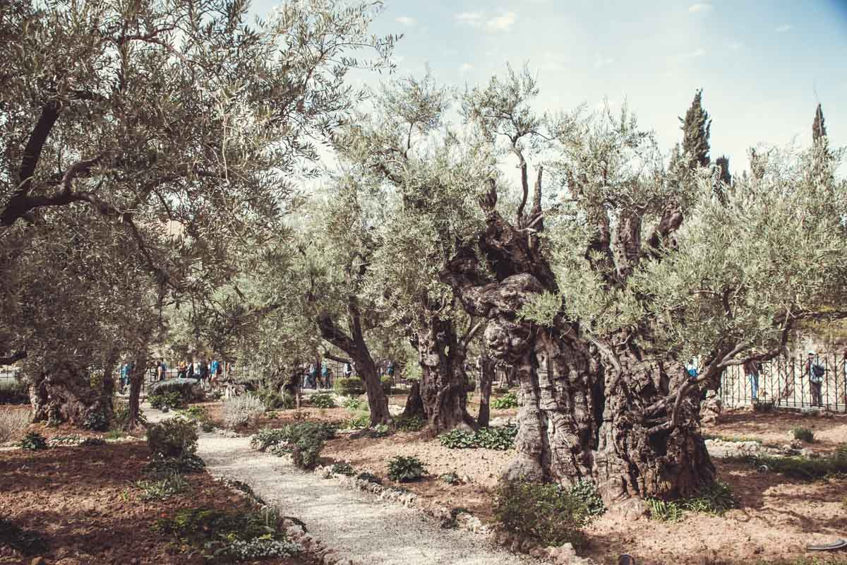 Jerusalem Gärten von Gethsemane