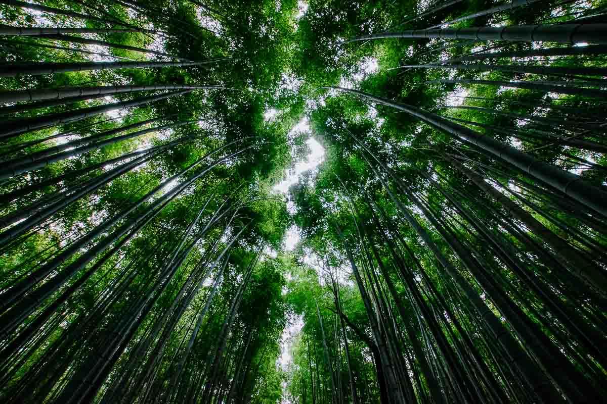 Kyoto Bambus Wald