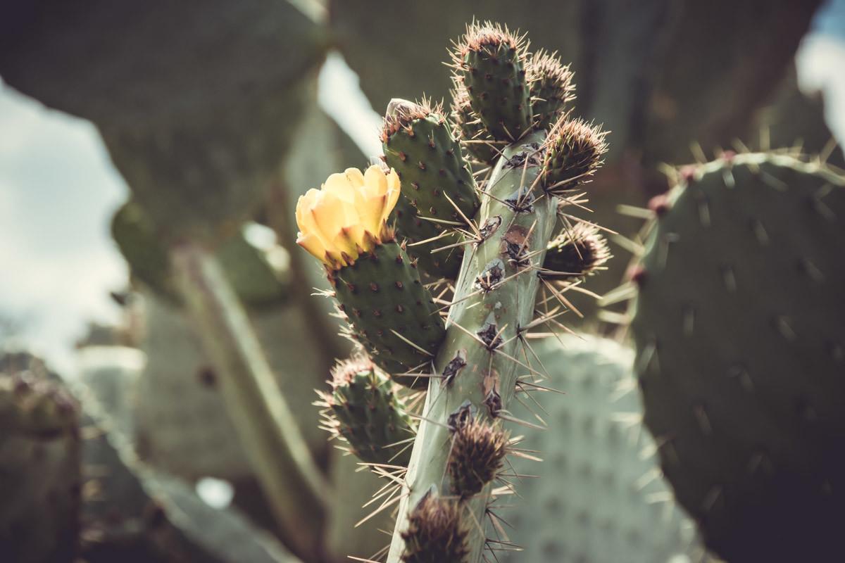 10 Tage Road-Trip Marokko - Kaktus