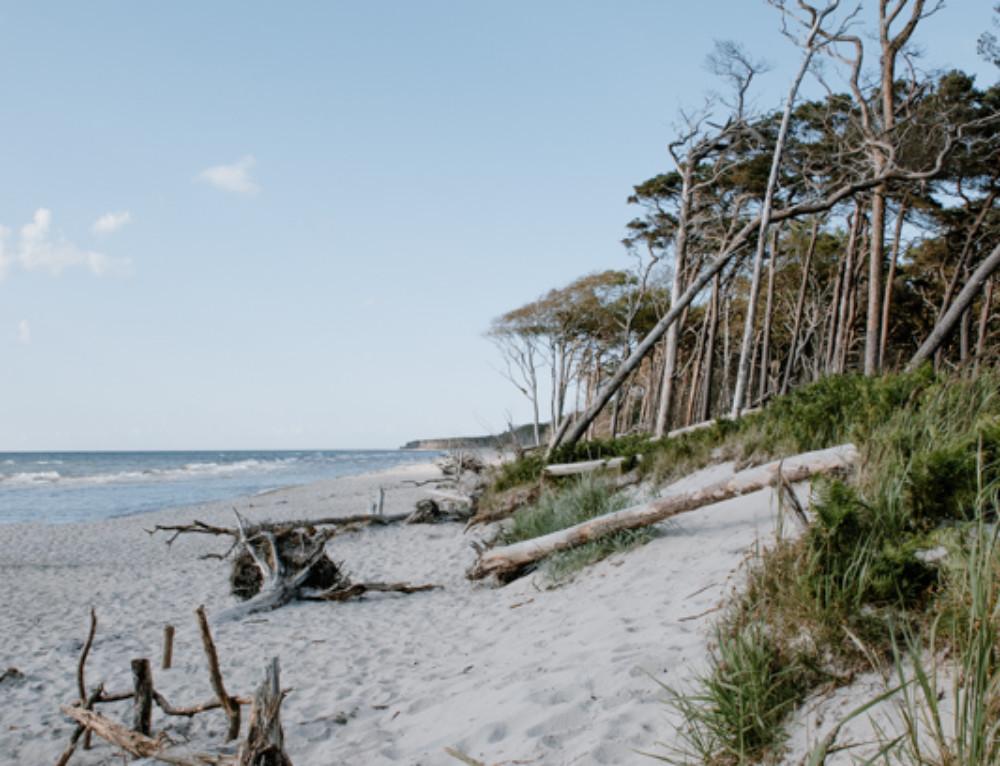 Familienurlaub auf Fischland-Darß-Zingst  «oder: Idylle an der Ostsee»