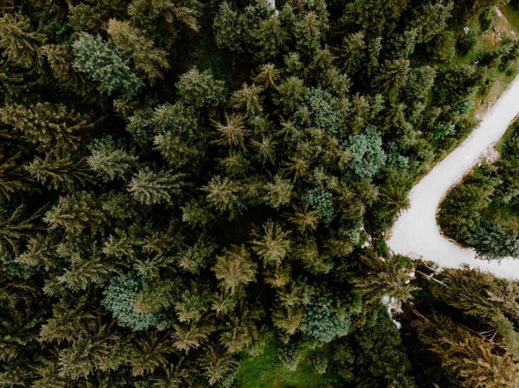 Achensee Wald von oben