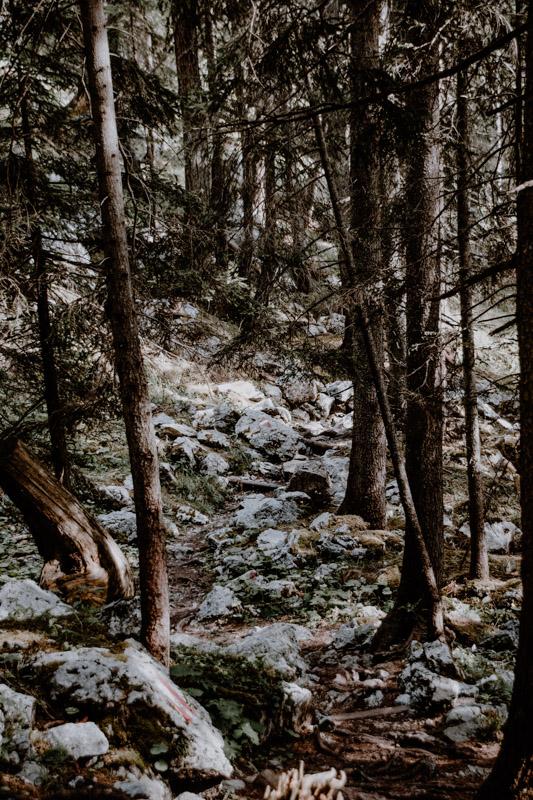 Wanderweg im Wald am Achensee